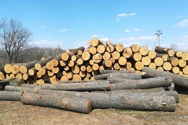 В Украине резко выросла незаконная вырубка лесов