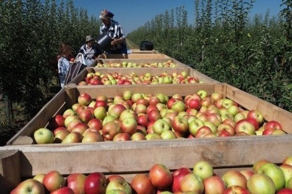 В Украине обвалилось производство сельхозпродукции