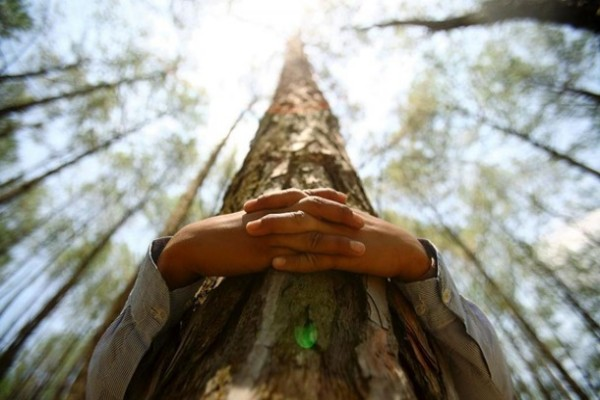Первый в мире чемпионат по обниманию деревьев состоится в Финляндии