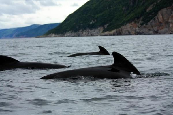 Ученые объяснили самый массовый выброс дельфинов