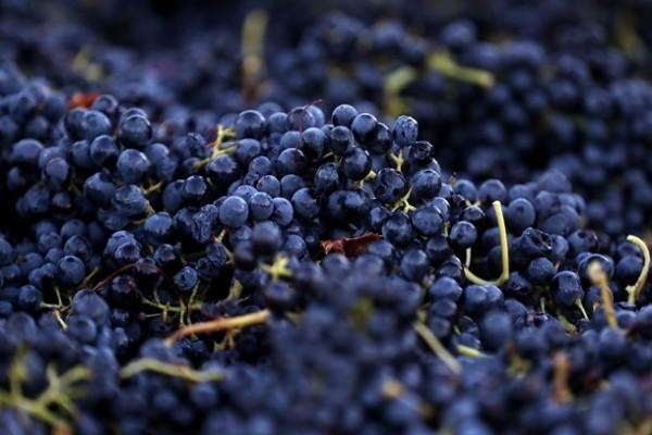 В Украине появился праздник в честь виноградарей и виноделов