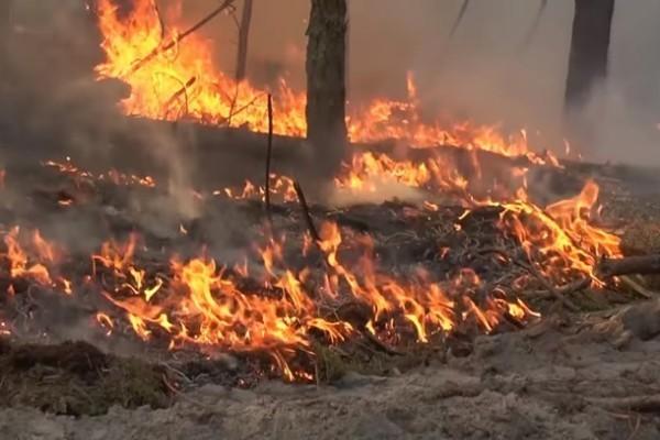 В МВД назвали возможные причины пожаров в Луганской области