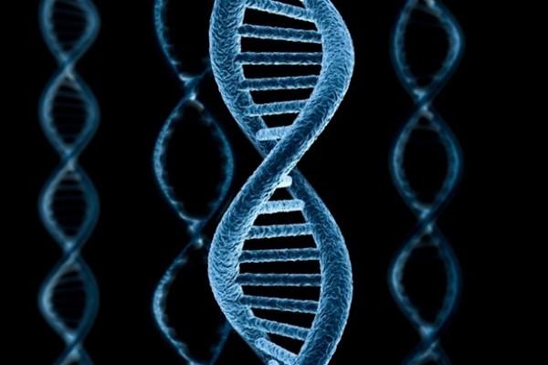 Ученые заявили о новой стадии эволюции человека