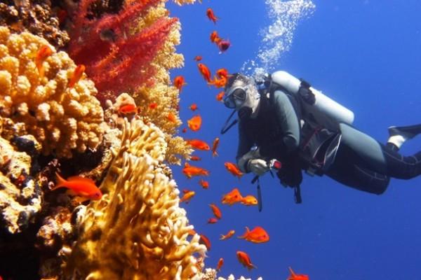 В Австралии создают Ноев Ковчег живых кораллов