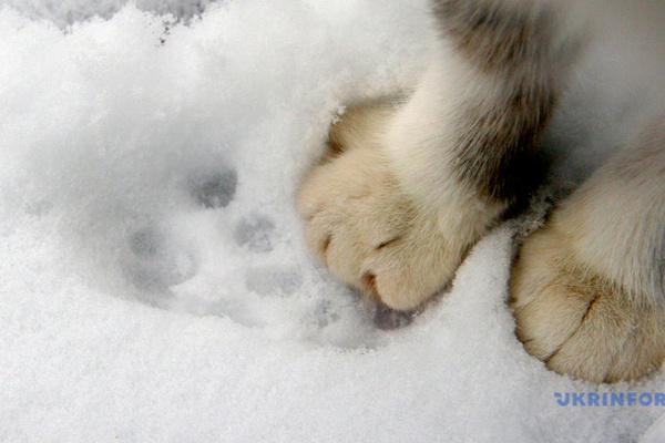Часть Украины засыплет снегом, на Закарпатье — до 13 ° мороза