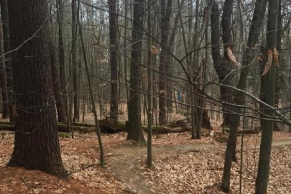 На Черниговщине в лесу найдено тело прокурора