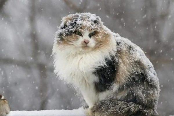 Значительное похолодание идет в Украину