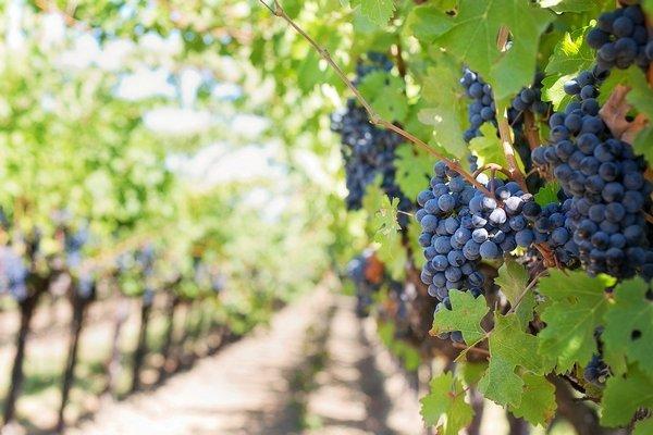 Правительство обновило программу господдержки садоводства и виноградарства
