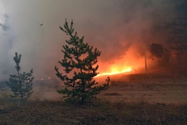 В Житомире представили систему космического мониторинга лесных пожаров