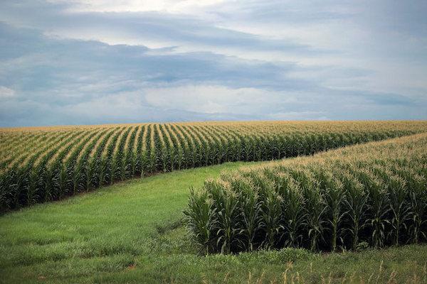 Рада в первом чтении приняла законопроект об агростраховании
