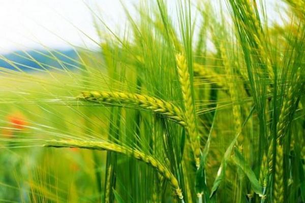 Гарант продовольственной безопасности Украины получил 200 миллионов убытков