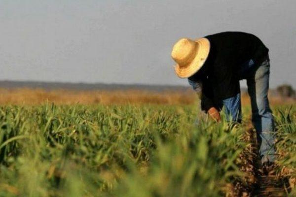 Кабмин хочет снизить площадь земли, доход от продажи урожая с которой не облагается
