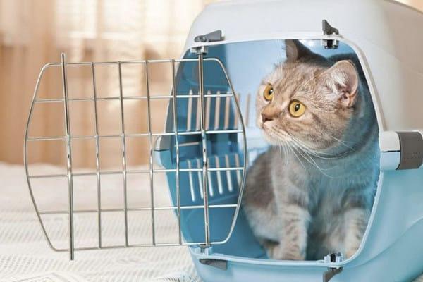 Какого размера должна быть переноска для кота