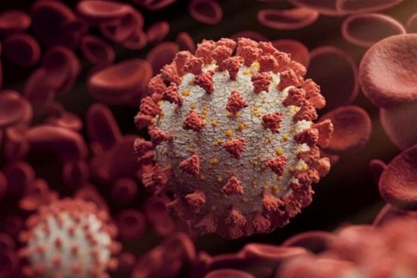 Турция испытывает собственную COVID-вакцину на основе вирусоподобных частиц