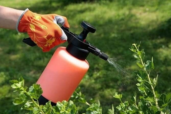 Інсектициди: засоби захисту від комах та шкідників